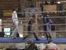 boxer-oschatz-02-13-4