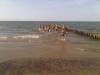 boxer-beach